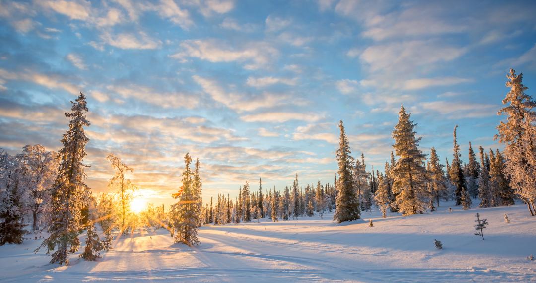 Magnified Monday #29: Lapland